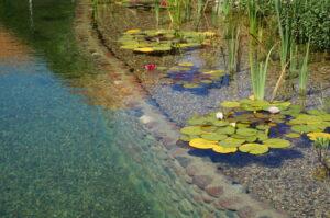 jakość wody w stawie kąpielowym